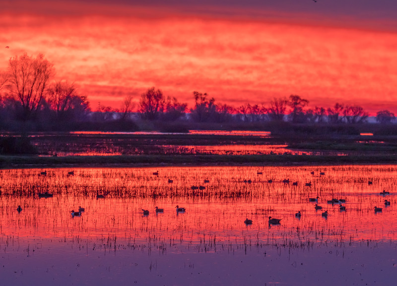 Crimson Dawn on the Pond and in the Sky
