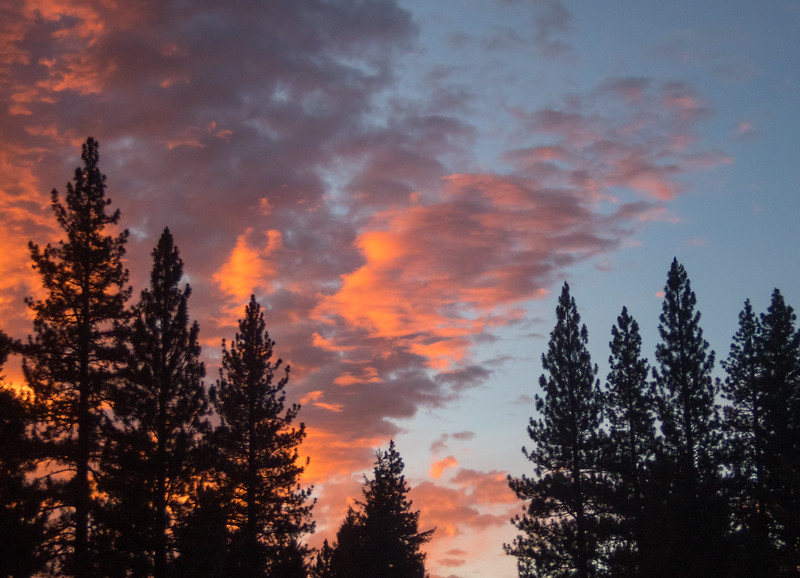 Pine Tree Silhouettes and Colorful Sky
