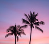 Two Palms and Sunset Colored Sky