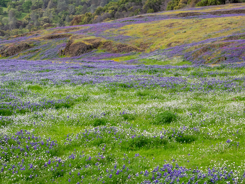 Purple and White Wildflowers on Rolling Hills