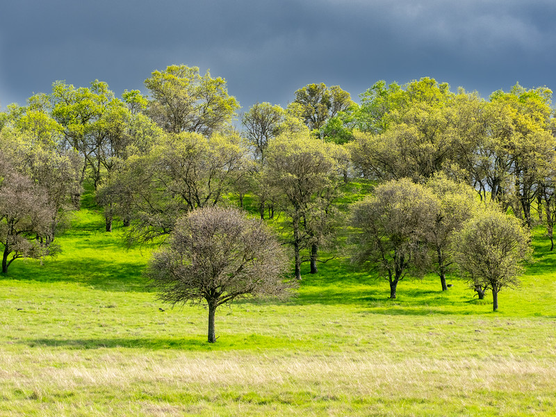 Spring Trees and Dark Sky