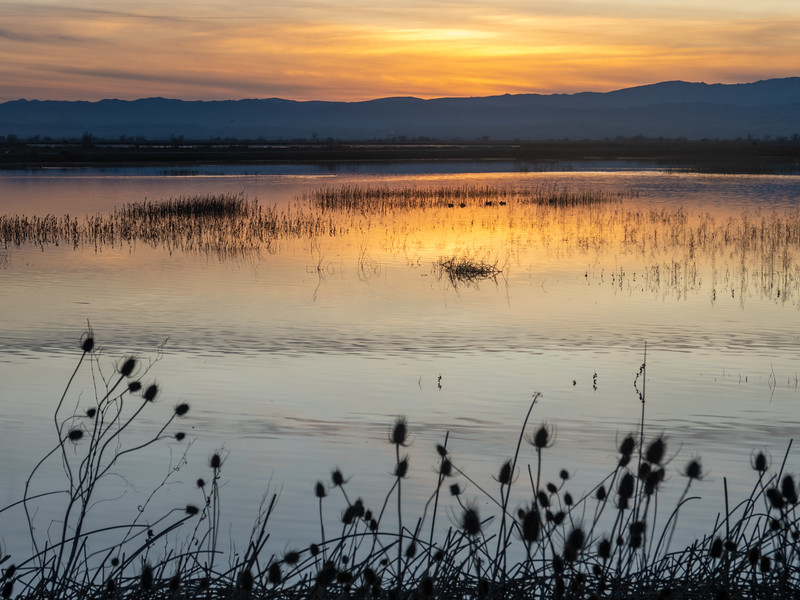 Dancing Reeds, Willows, and Reflecting Sunset Light