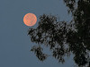 Wildfire-Colored Setting Moon