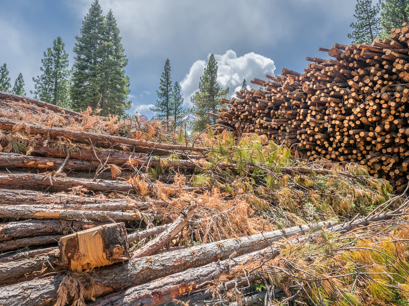 Timber Cuttings and Clouds
