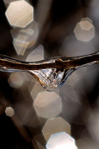 #1529  Icelet on twig  (frozen droplet) with internal lens reflections from light coming from  other icelets, out-of-focus in the background
