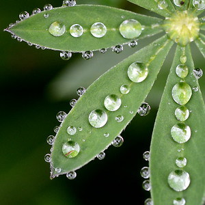#1612  droplets