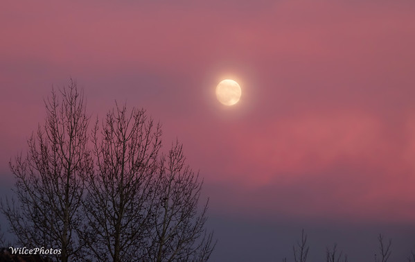 Moon In Red Sunset Sky (Photo #9248)