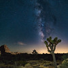 Joshua Tree and Milky Way