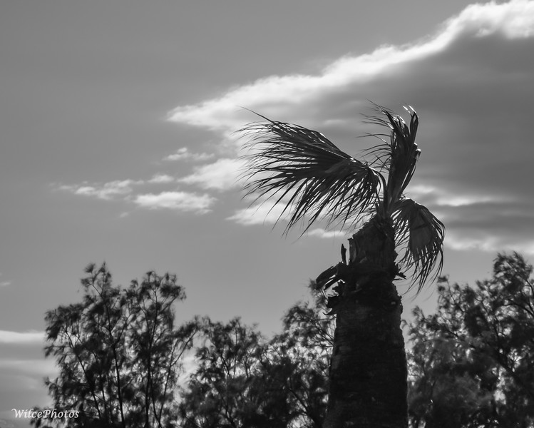 PalmTreeInGlintingSun(Photo #5423)