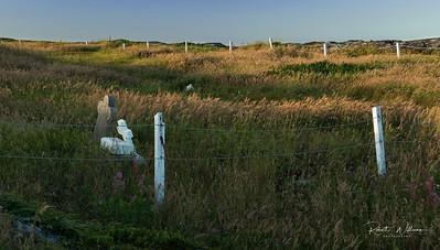 Cemetery on Greenspond Island