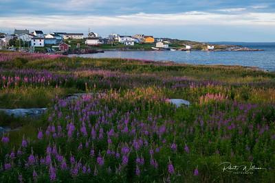 Field of Fireweed on Ship Island