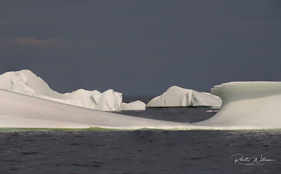 Icebergs in Mutford Cove, North Twillingate Island