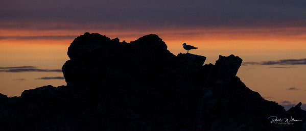 Silouette at Sunset, Twillingate, Newfoundland