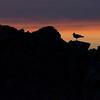 Silouette at Sunset, Twillingate, Newfoundland