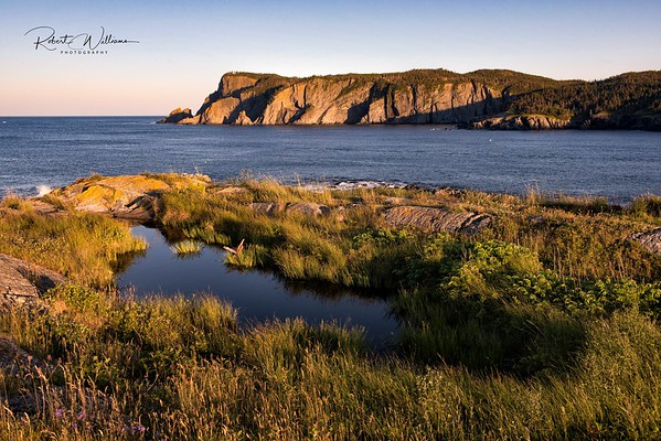 Brigus Head as seen from Timber Cove Island