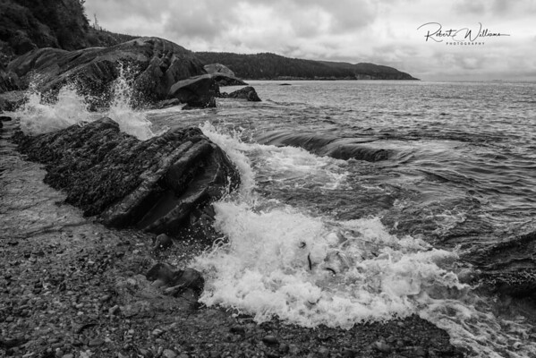 Storm surge and Capelin in Island Cove
