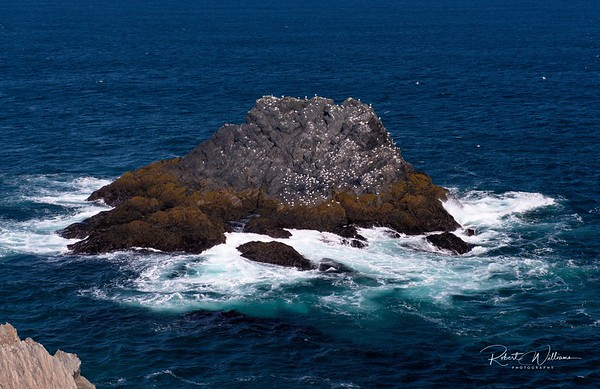 Island offshore at Cape Race