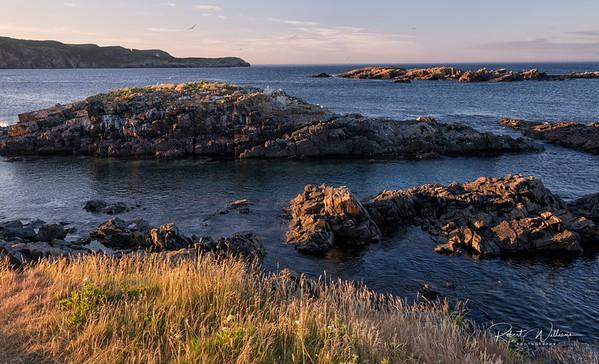 Coastline in Elliston, Newfoundland