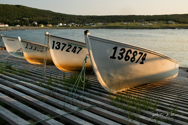Fishing Boats in Newman's Cove