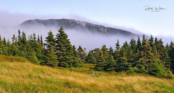 Fog Across the Bay