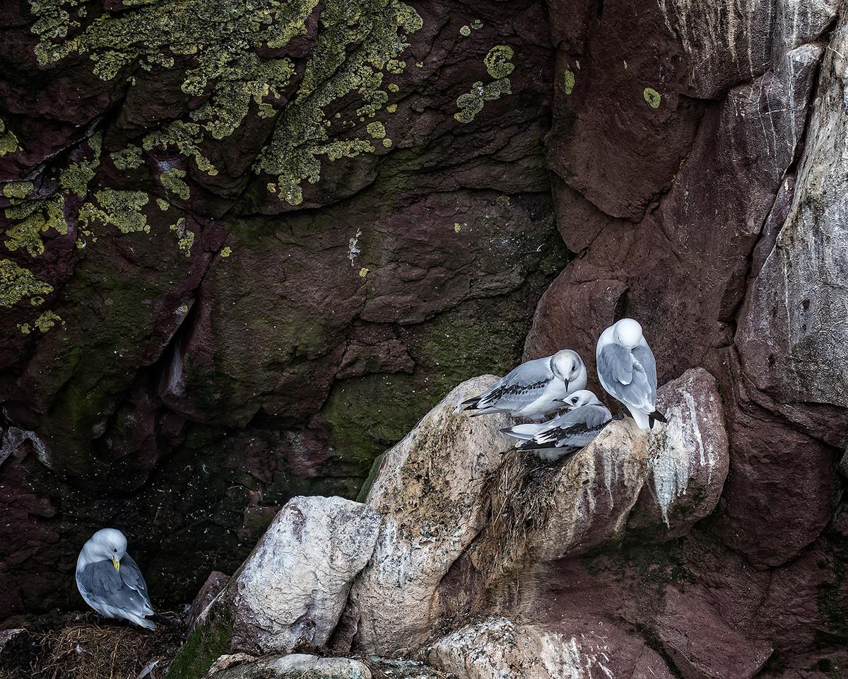 Gull Family