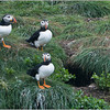 Puffins on Watch!
