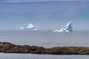 Icebergs off Fogo, Fogo Island, Newfoundland and Labrador, Canada.