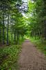 A path through the forest at the Beothuk Interpretation Center near Boyd's Cove, Newfoundland and Labrador, Canada.