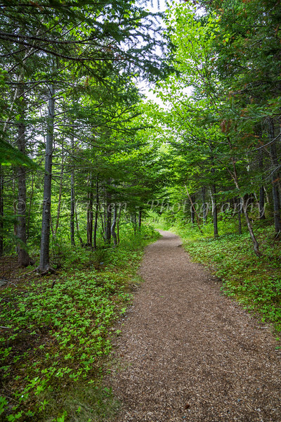 A path through the forest at the Beothuk Interpretation Center near Boyd's Cove, Newfoundland and Labrador, Canada.