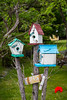 Three bird houses in the garden at the picturesque fishing village of Brigus, Newfoundland and Labrador, Canada.