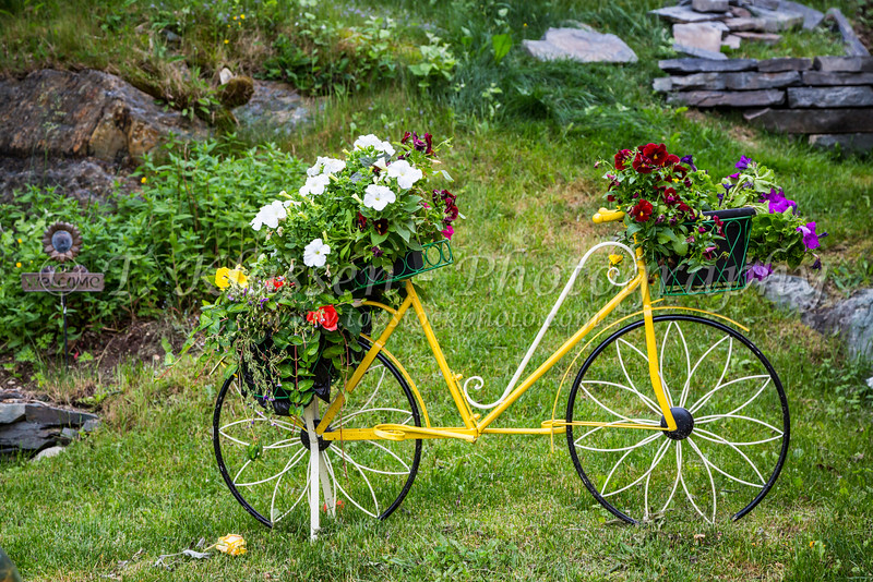 A decorative bicycle with flowers at the picturesque fishing village of Brigus, Newfoundland and Labrador, Canada.