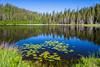 A reflective pond in Gros Morne National Park, Newfoundland and Labrador, Canada.