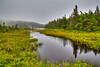 Wetlands along Route 10, Newfoundland and Labrador, Canada.