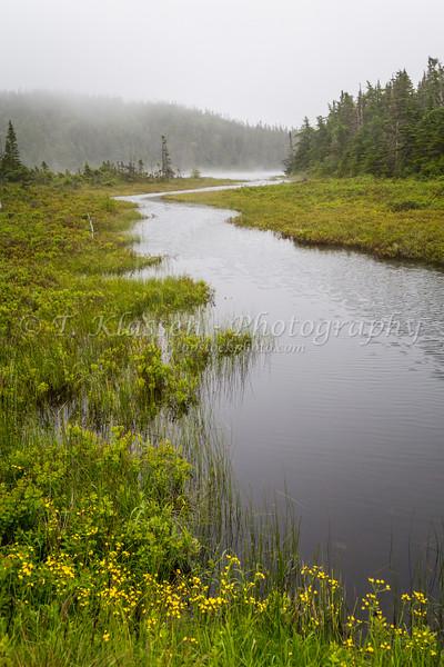 Wetlands and bog along Route 10, Newfoundland and Labrador, Canada.