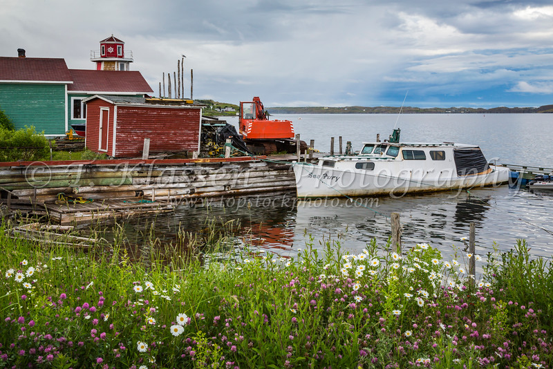 Fish stages and wildflowers at Spaniard's Bay, Newfoundland and Labrador, Canada.