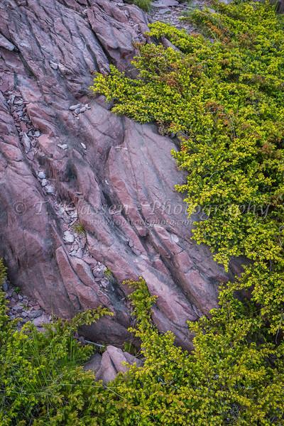 Pink rocks and vegetation near Tickle Cove, Newfoundland and Labrador, Canada.