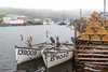 Fishing boats in the harbour at Trout River, Newfoundland and Labrador, Canada.