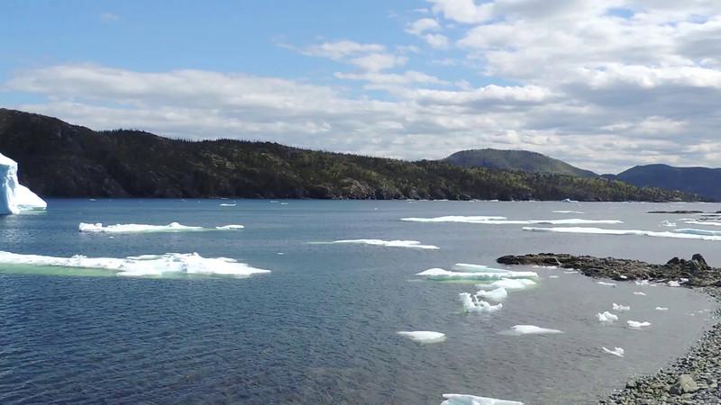 Big iceberg in Harry's Harbour
