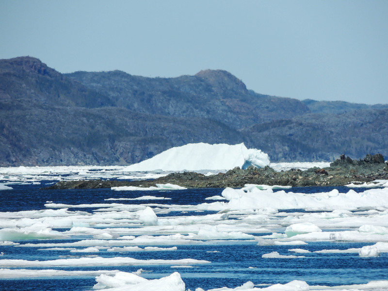 Berg in the ice, Jackson's Cove