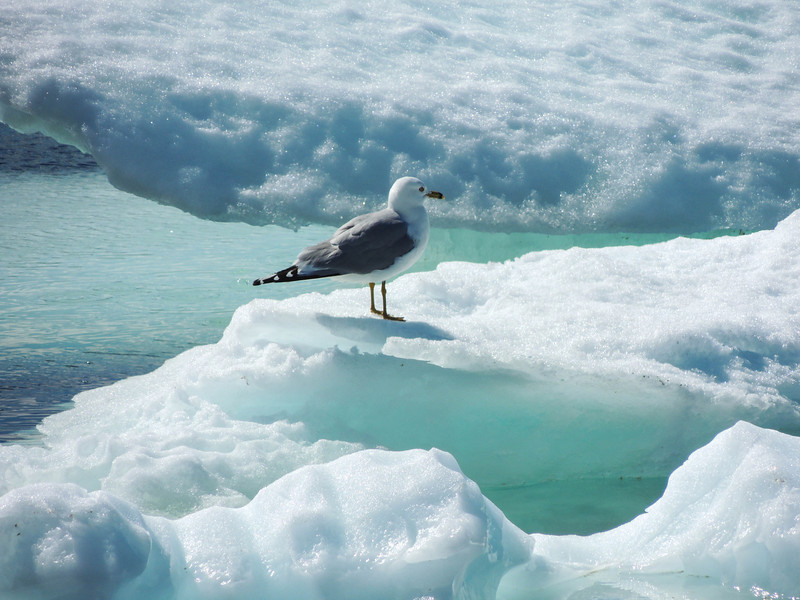 A seagull cooling his heels