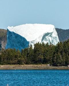 Iceberg in the woods!