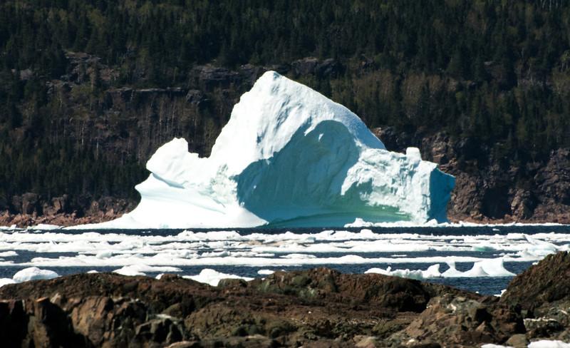 Iceberg across the neck at Jackson's Cove