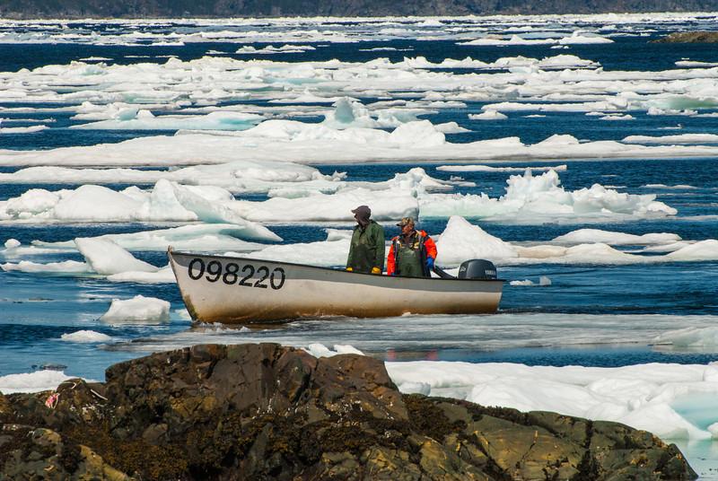 Picking their way through the ice