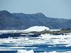 Berg in the ice, Jackson's Cove