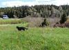 A good run in a grassy field!