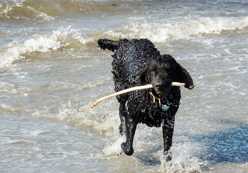 Shallow Bay- Wet Tagga!