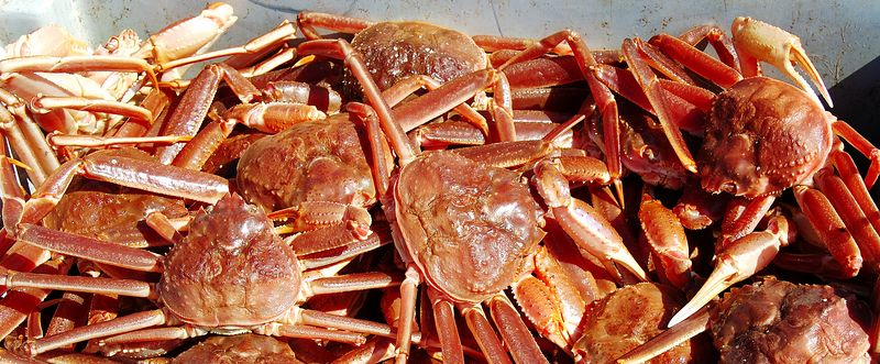 Snow Crab, Trout River, Newfoundland