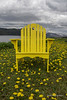 Yellow chair and dandelions, Bonne Bay, Newfoundland