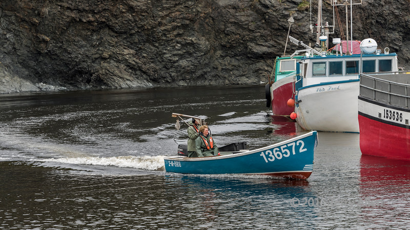Lobster fishers coming into harbour, Trout River, Newfoundland