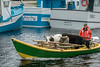Three cows in a boat
